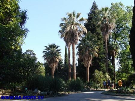 Дендрарий в Сочи. Пальмы.