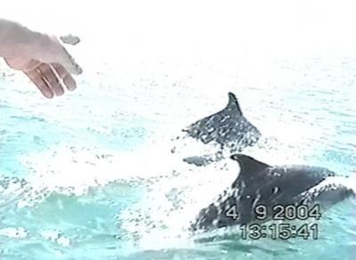 Дельфины в Чёрном море
